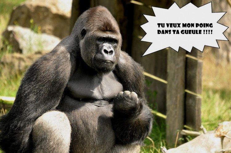 Fond d 39 cran cat gorie divers humour animaux for Fond ecran drole