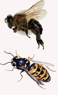 guepe abeille. Black Bedroom Furniture Sets. Home Design Ideas