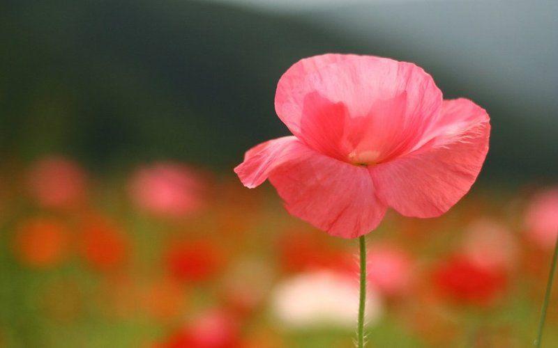 Fond D Ecran Categories Fleurs Printemps Et Animaux