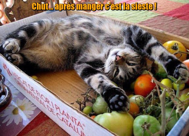 http://ageheureux.a.g.pic.centerblog.net/EGAMMeV5ELnm.jpg