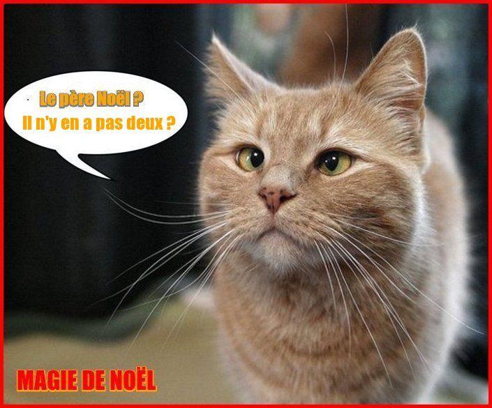 Sehr Belles images MAGIE de NOEL (Humour texte animaux ) TC73