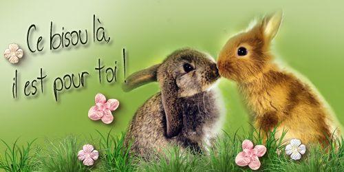 bisou-lapins.jpg