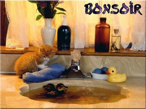bonsoir_1
