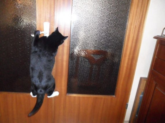chat-ouvre-porte-img.jpg