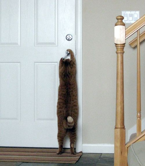 chat-ouvre-porte.jpg