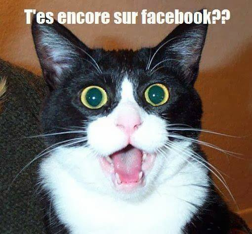 Turbo images texte droles humour ( animaux) WU33