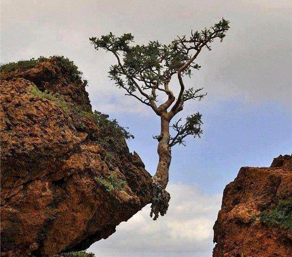 Nature ... Image001curieux