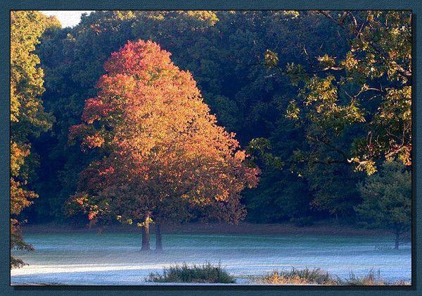 belles images paysages d 39 automne dont anim s. Black Bedroom Furniture Sets. Home Design Ideas