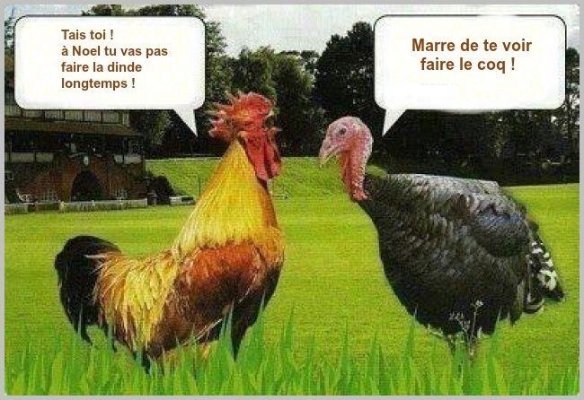 Blague - Catgorie animaux - Coq Super-blagues
