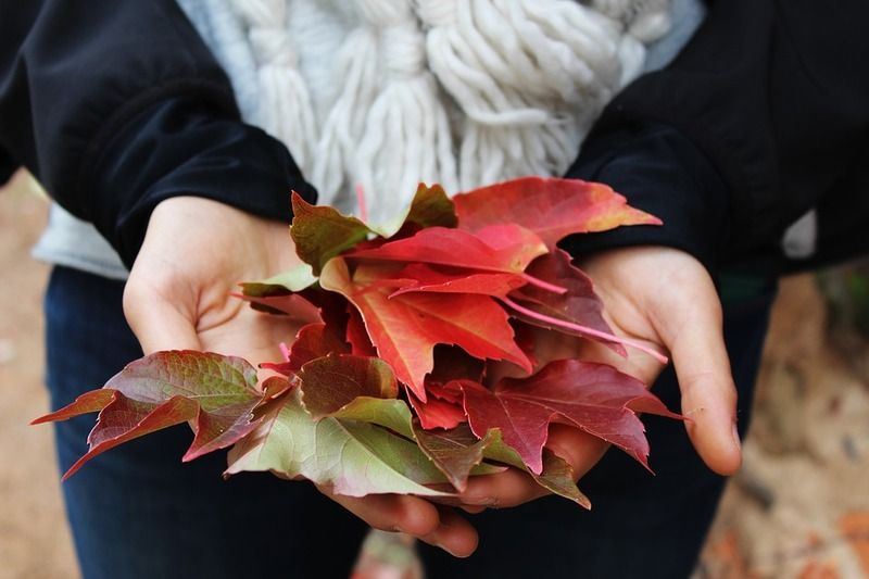 leaves-1031181_960_720
