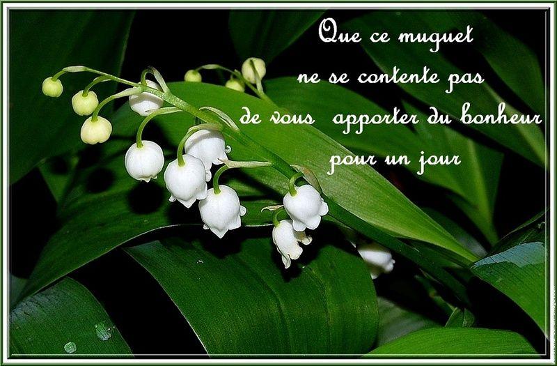 Muguet avec coccinelles porte bonheur images - Image muguet 1er mai gratuit ...