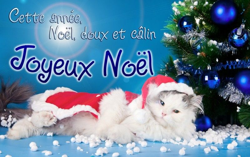 noel-doux-​calin-chat