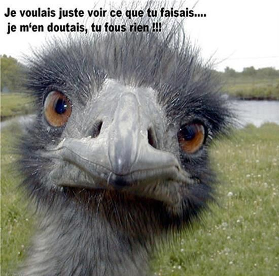 a65 bis images gifs animaux - Page 2