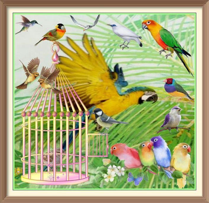cr ation de reinette ouvrez ouvrez la cage aux oiseaux. Black Bedroom Furniture Sets. Home Design Ideas