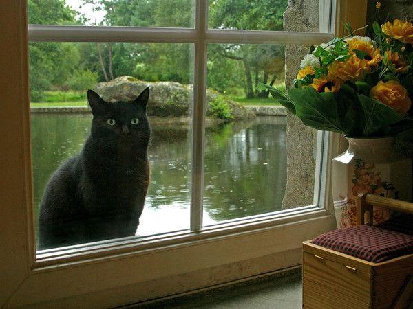 Gif chat devant la fen tre for Devant la fenetre