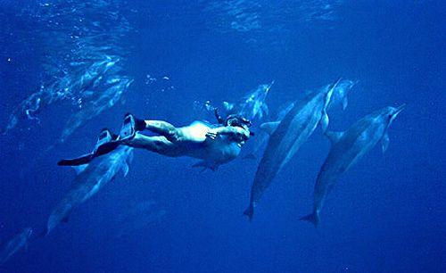 Venez nager avec les dauphins images vid os for Nager avec les dauphins nice