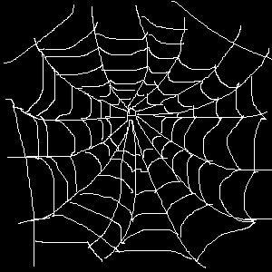 astuces lutter contre les araign es dans votre maison. Black Bedroom Furniture Sets. Home Design Ideas