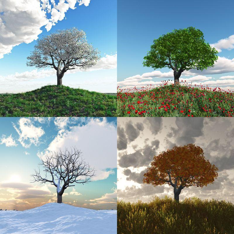 Printemps et les 4 saisons de l 39 ann e for Les jardins 4 saisons