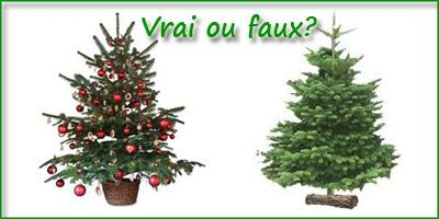le saviez vous sur les sapins de noel. Black Bedroom Furniture Sets. Home Design Ideas