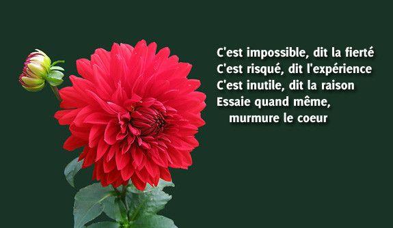 Des fleurs pour le dire citation po sie for Bouquet de fleurs humour